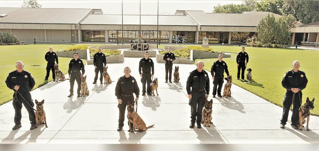 CHP canine teams